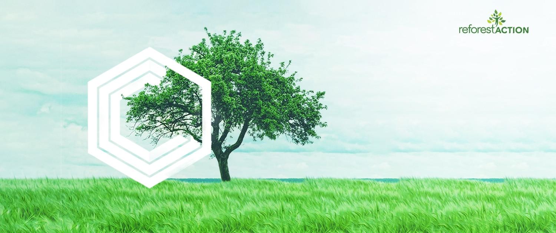 Opti-Ouest conseil : Arbre - Plantation d'arbres